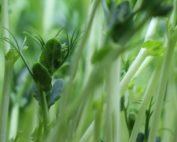 Grüne Alleskönner, Salz und Pfeffer